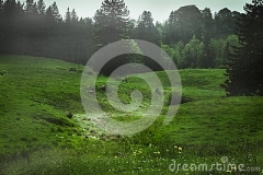 eine-grüne-wiese-mit-etwas-nebel-im-hintergrund-116204668