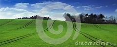 rapssamenfeld-mit-traktorbahnen-113942274
